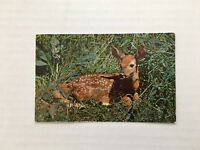 Vintage Fawn Deer Postcard Greetings From Petoskey Michigan Curteichcolor 3-D