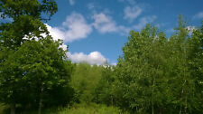 Young Woodland For Sale Between St Malo & Rennes in Brittany France