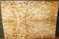 Spalted Arce Nudo Madera 9064 Luthier Explorer-Flying V Guitarra Top 28x20x.500