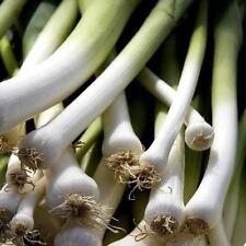 Légumes Poireau Jolant 60 Graines