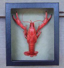 E508) Real S Red Crayfish Crawdad Crawfish framed 5X6 mount Taxidermy Display