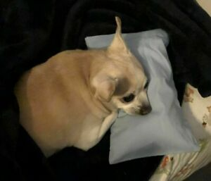 Pillow and Pillowcase for Dog with Collapsed Trachea For Pet Bed New
