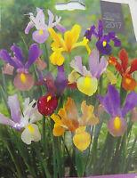 DUTCH IRIS BULBS MIXED VARIETY spring summer garden flowers borders new