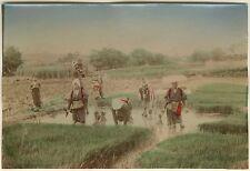 PHOTO JAPON 1880 - TRAVAILLE DANS LES RIZIERES TIRAGE ALBUMINE REHAUSSE COULEUR