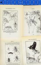 Cicada, Fly, Butterfly, Katydid, Caterpillar-Insect Wookblock Illustrations 1934