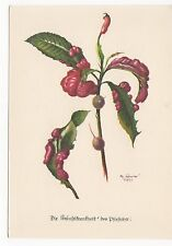 Flowers, Taphrina Deformans Tul, P.H. Gonner Art Postcard, A477