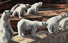 # M2761    POLAR BEARS,  DETROIT ZOO,  DETROIT,  MI.  LINEN  POSTCARD,