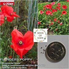 100 FLANDERS POPPY SEEDS(Papaver rhoeas); Beautiful bright red flowers