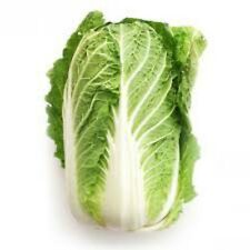 Chinese Cabbage Wong Bok 150 Asian Vegetable seeds