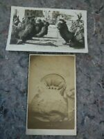 Antique CDV of Dog on Chair by Augustus Morand of Brooklyn & Photo of Camels