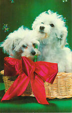VINTAGE WHITE TOY POODLES DOGS IN WICKER BASKET POSTCARD UNUSED LUSTERCHROME
