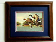 MALLARD DUCK PICTURE  DUCKS FLYING DUCK HUNTING WATERFOWL MATTED FRAMED 8X10