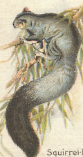 Vintage tobacco cigarette silk card - Birds & Animals Australia, Flying Opossum
