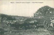 HAITI CHAMP DE CANNE A LEOGANE CANE FIELD AT LEOGANE