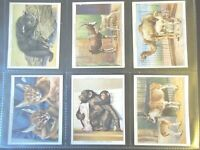 1938  Player ZOO BABIES young baby animals set 25 cards Tobacco Cigarette