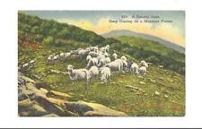 MOUNTAIN PASTURE Sheep Grazing Vtg Linen Postcard