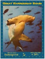 Great Hammerhead Shark, an Endangered Species by PostcardsTo SaveThePlanet.org