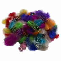 50pcs Mixed Color Simulation feather P3Y6
