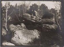 Forêt de Fontainebleau France Vintage argentique ca 1910