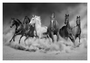 Running Horses - Black And White Animals Wall Art Large Poster & Canvas Pictures