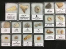 17 Piece Fossil Collection - Mosasaur, Dinosaur, Bone, Tooth, Egg, Shark