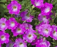 50 Pelleted Seeds Opera Supreme Pink Morn Trailing Pelleted Petunia Bulk Seeds