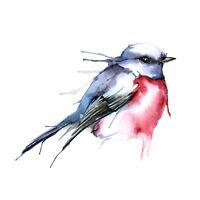 Bird Robin Watercolour Large Wall Art Print Canvas Premium Poster