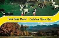Carleton Place Ontario Canada~Banner Greetings~Twin Oaks Motel~Cows~1960s PC