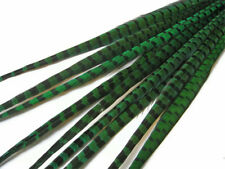 """10 pieces- 20-22"""" Peacock Green Dyed Natural Long Ringneck Pheasant Tail Feather"""