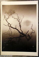 Carte postale Michael Kenna Dawn Richmond Park 1979, branche lac  postcard