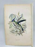 DELUXE ED Hand-colored Plates 1840 Jardine History Hummingbirds #6 Loddiges