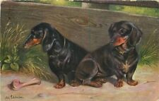 Artist impression Dachshund Dogs German American Novelty Postcard 11561