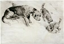 BORDER TERRIER FELLHOUND DOG ANTIQUE ART ENGRAVING PRINT by George Vernon-Stokes