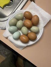 1 Dozen+3 Farm Fresh Delicious Chicken Eggs Free Range Organic No Antibiotics