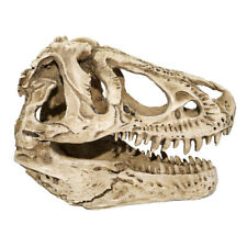 Tyrannosaurus T-Rex Dinosaur Skull Resin Replica Fossil Model Fossil Bone White
