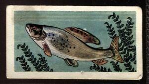 Tobacco Card, Amalgamated, Mills, FRESHWATER FISH, 1958, Grayling, #19
