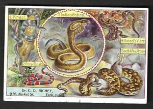 "1890's York,PA - C. D. Richey Registered Dentist ""Snakes"" Advertising Card"