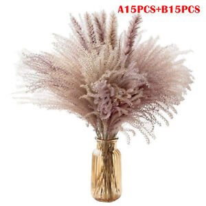 Natural Dried Flower Reed Pampas Wheat Ears Setaria Grass Bunch Home Party Decor