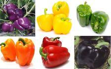 Cubic Pepper Seeds 6 pack different colors Ukraine Heirloom Vegetable Seeds