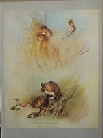 Vintage Natural Historia Estampado ~ Harvest Ratón ~ Madera Ratón