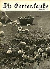 Rarität - Illustrierte DIE GARTENLAUBE Nr 19 vom 12.5.1932, Junge Enten am Teich