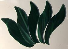 PRE CUT Spectrum Glass GREEN LEAF #4 Stained Glass Supplies Mosaic 5 Pcs
