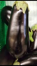 AUBERGINE Beauté noire 700 Graines frescas
