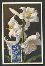 SAN MARINO MK 1957 FLORA WEISSE LILIE MAXIMUMKARTE CARTE MAXIMUM CARD MC d5886