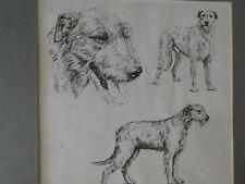 Irish Wolfhound print by Bridget Olerenshaw (book page)
