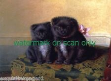 c1870~Two Black w White Pomeranian Puppy Dogs Sit on Table~ NEW Large Note Cards