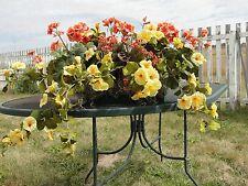 "24"" Window Box Custom Geraniums Yellow Azaleas Cottage Shabby Chic High End"