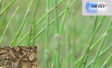 100g Horsetail dry herbs mu zei