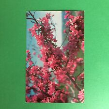Lemon Crab Apple Malus Purpurea Lemoinei Unposted Postcard
