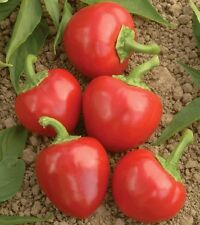 100 RED CHERRY HOT PEPPER Chili / Finger Hots Seeds